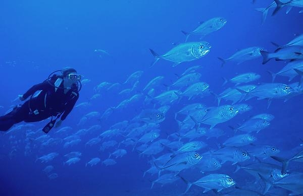 Diver_Makrelen