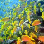 Apo-Reef