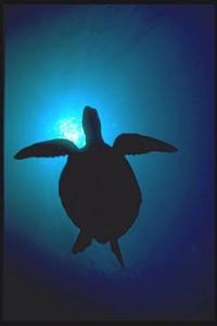 Turtle%201[1]