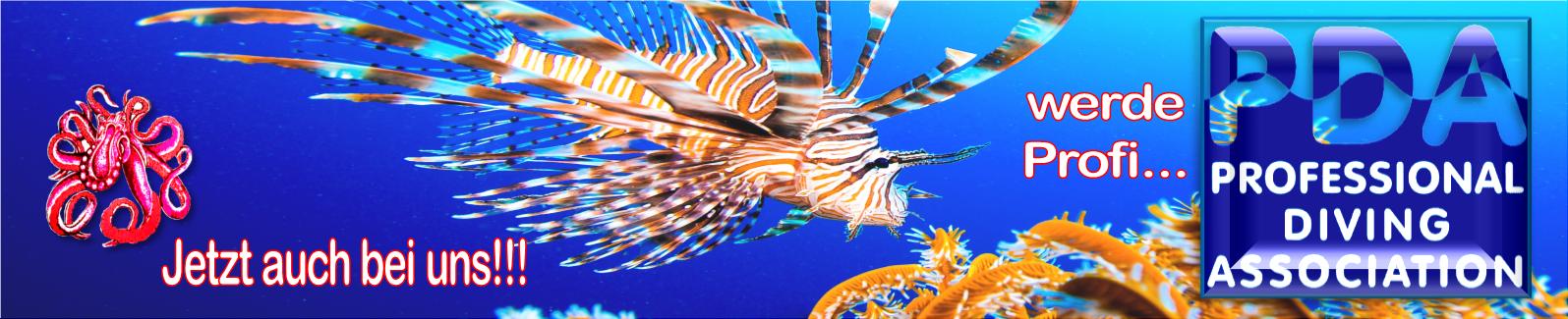 Ja, jetzt auch bei uns, den Octopus Divers...